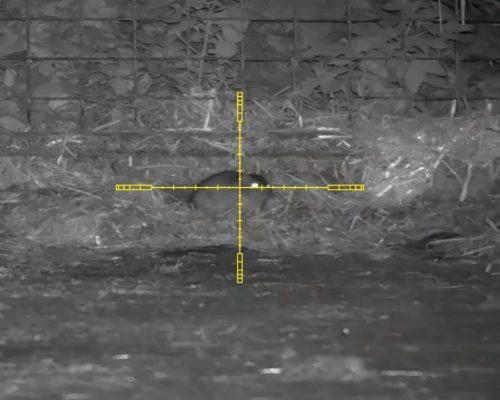 Pard Nv008 LRF Shooting-1